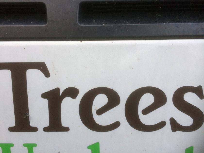 029 - Trees